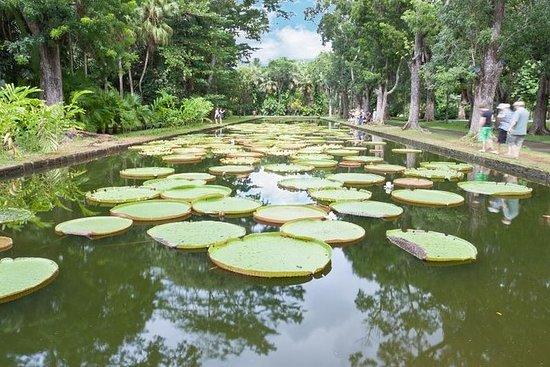 Private North Day Tour: Botanische ...