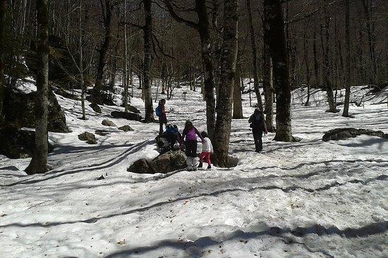 Watching wildlife in winter, a trek...