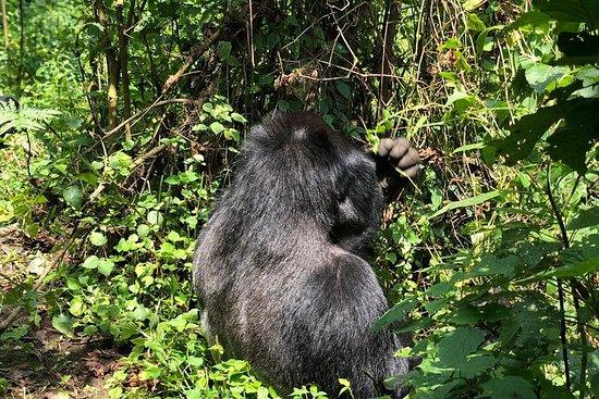 4日游乌干达大猩猩徒步旅行与Bunyonyi湖