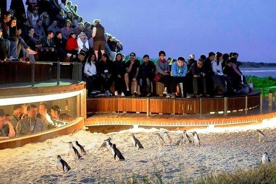 Great Ocean Road e Phillip Island - 3 giorni, 2 notti