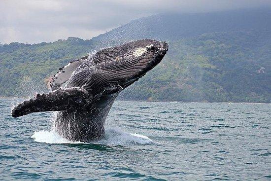Maui Whale Watch Cruise from Lahaina...