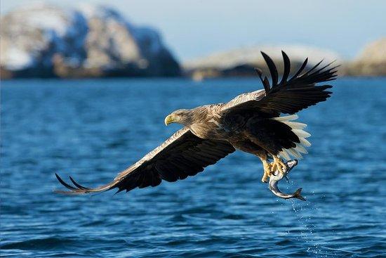 峽灣,北極野生動物和文化巡遊
