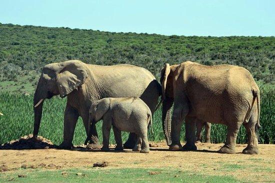 3-daagse Weekend Safari Safari Tour