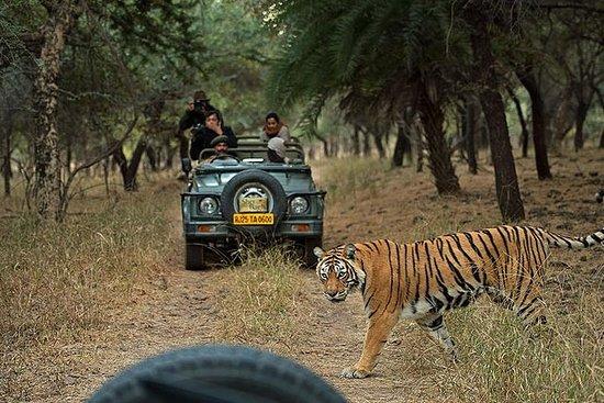Tour privé de 6 jours sur le tigre...