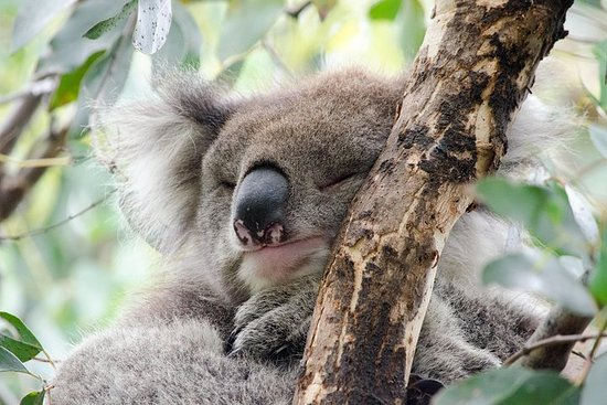 Great Ocean Road Reverse Itinerary and Phillip Island 2 Day Wildlife...
