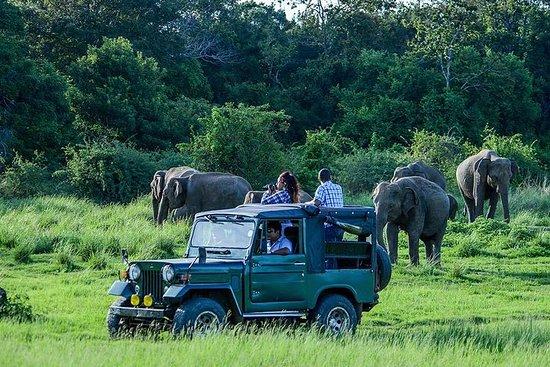 Udawalawe Safari - Bentota et ses...