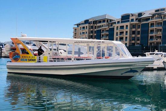Adelaide Ocean Safari