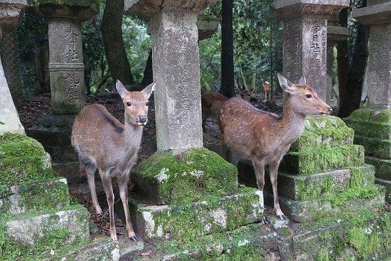 从大阪或京都到奈良的一日游,世界遗产和鹿园之旅