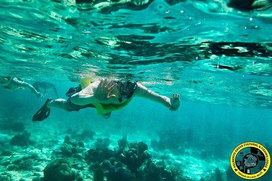 Barrière de corail plongée et plongée