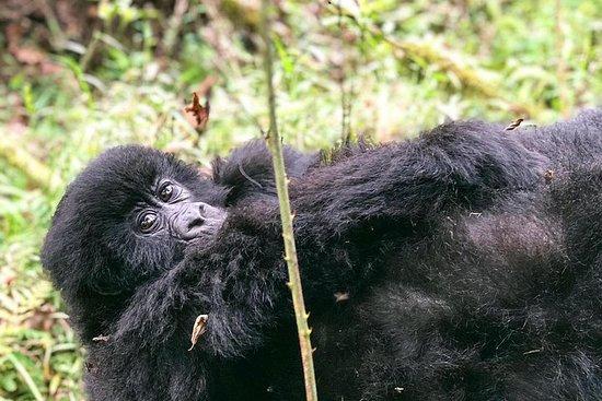 6 Day Uganda Gorilla Safari and Lake Bunyonyi Homestay Experience
