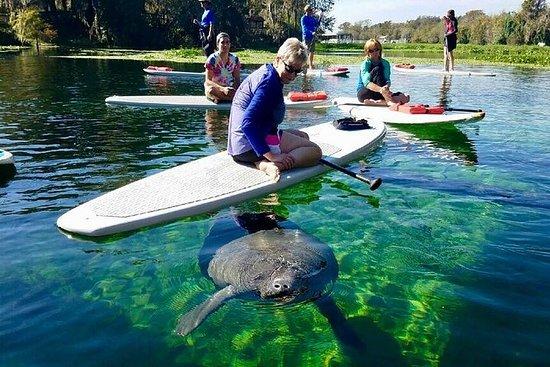 Peddelen in Florida met zeekoeien