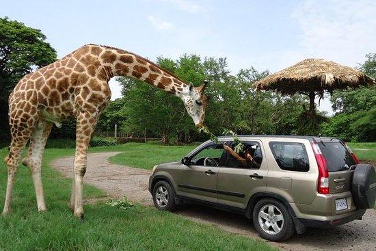 2-Day Tour: Auto Safari Chapín Zoo and Monterrico Black Sand Beach...