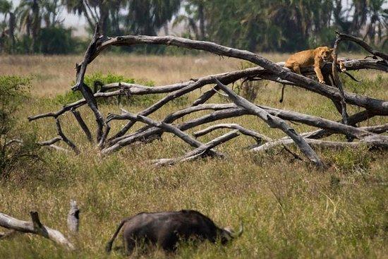7 Days 6 Nights Taste of Northern Tanzania Safari – fotografia