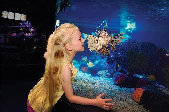 Skip the Line: SEA LIFE Aquarium Minnesota Admission Ticket at Mall...