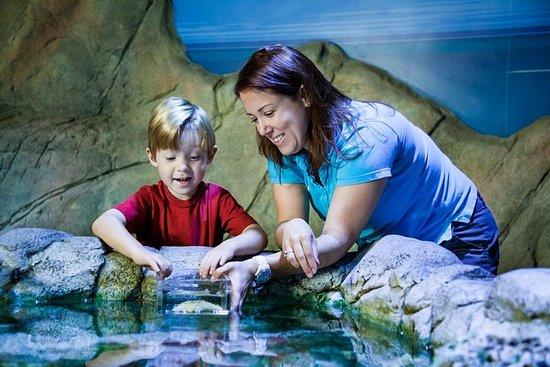 Skip the Line: SEA LIFE Charlotte Concord Aquarium Admission Ticket