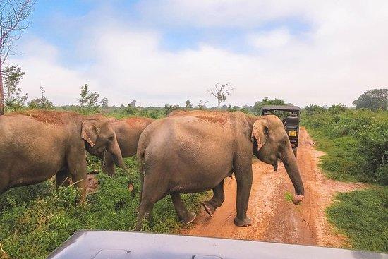 Parc national de Bundala Safari