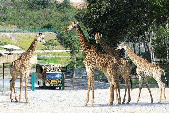 Bukit Gambang Safari Park Admission...