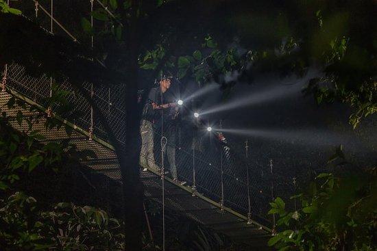Nocturnal Walk in the Hanging Bridges Φωτογραφία