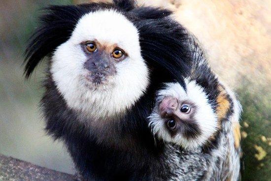 Billet pour le zoo Lloc de Menorca uniquement
