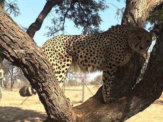 Tour door het Ann Van Dyk Cheetah ...