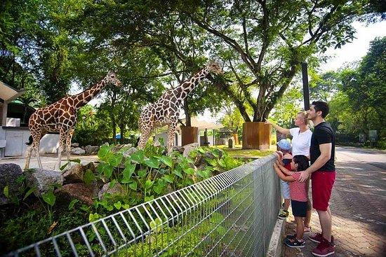 Explorez la visite d'une journée complète du parc animalier de Kuala...