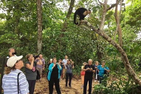 Expédition dans la forêt tropicale et...