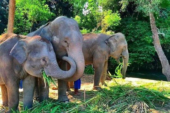 Un jour d'éléphant à Chiang Mai, par...