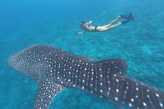 Tour dello squalo balena