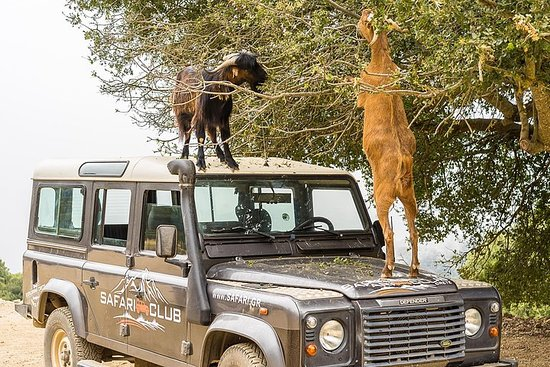 Ganztägige LandRover-Safari ab...