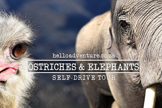 Self Drive Tour - Cape Town, Route 62, Garden Route og Addo Elephant...