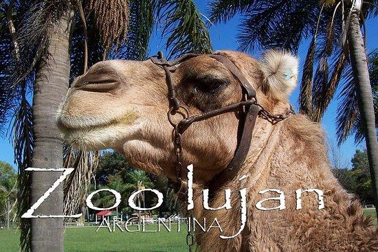 参观动物园和卢扬城