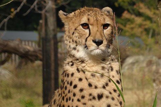 Billet d'admission au zoo de Yokohama