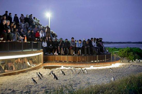 从墨尔本出发的菲力浦岛与野生动物小团旅行,包括企鹅观赏台