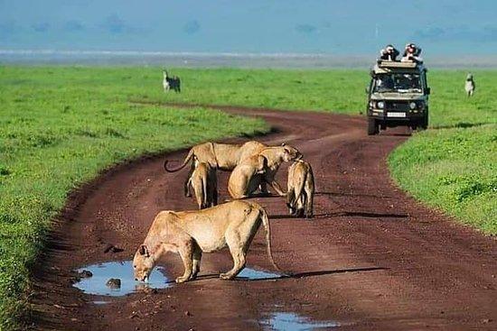 Excursion d'une journée à Ngorongoro
