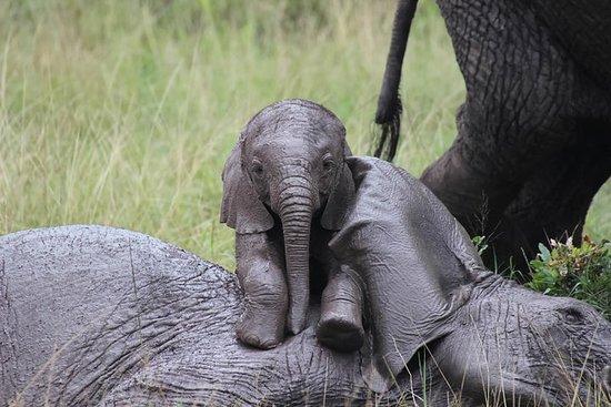 Dagtour: Giraffe Center, Elephant ...