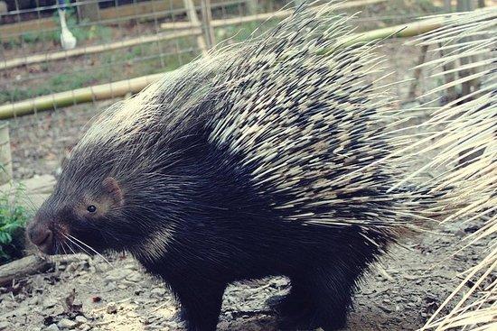 Combo de la faune du Zoo de Géorgie du Nord