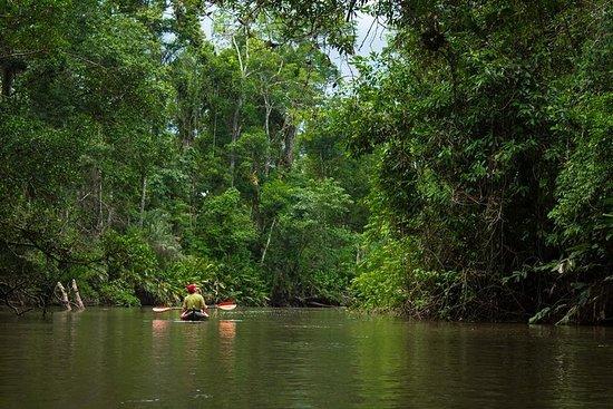 5-daagse Cuyabeno Amazon Adventure