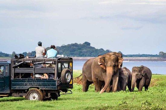 Jeep Safari à l'un des parcs...