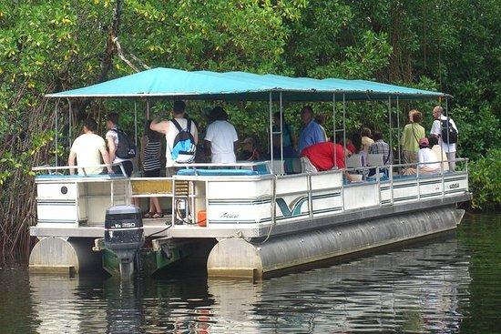 Private YS Falls and Black River Safari from Negril