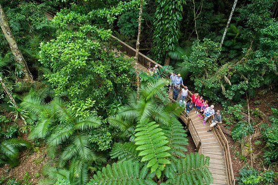 Cape Tribulation, Daintree River Cruise and Bloomfield Track Small...