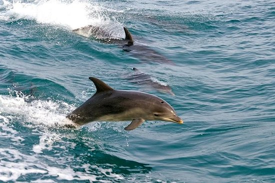 Sydney Day Tour til Port Stephens (Dolphins, Sandboarding, Lookouts)