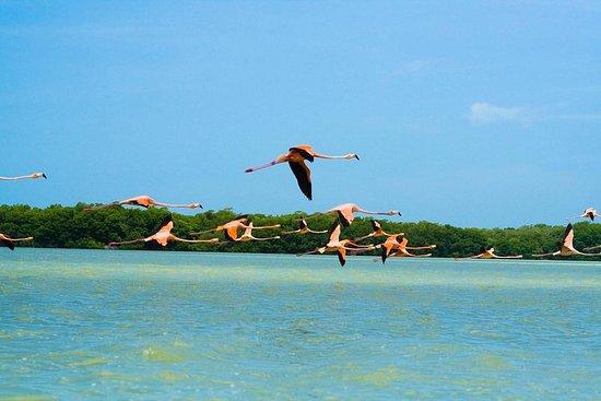 8天尤卡坦半岛:奇琴伊察,乌斯马尔,埃巴拉姆和图卢姆的小团体