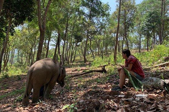 Care Pride Elephants (Full Day)