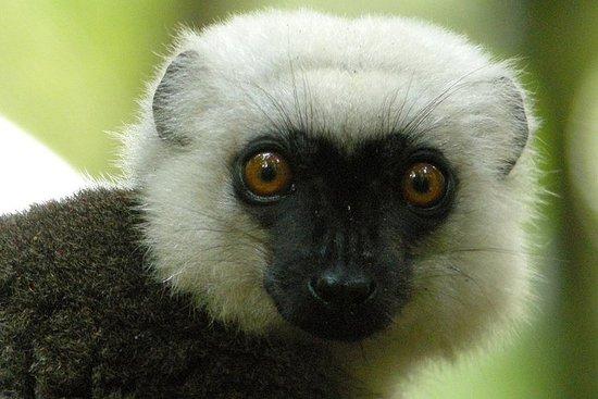 Tour de 20 jours de Madagascar