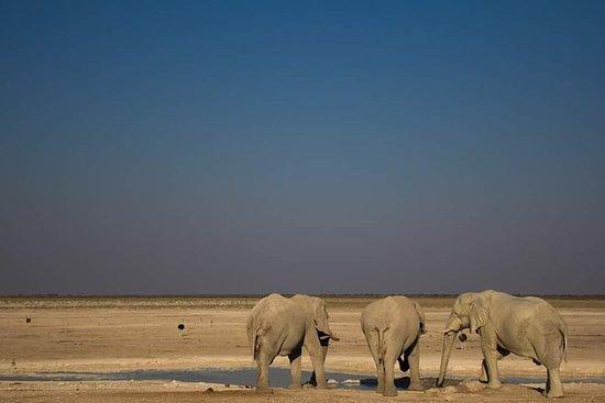 3-Day Etosha Express Accommodated Safari from Windhoek