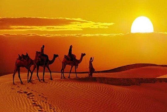 Sunset Safari Avec Dîner