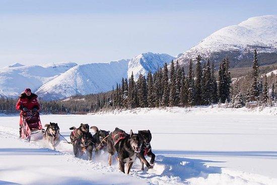 Aktives Winterabenteuer im Yukon | 5...