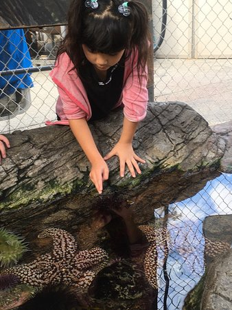 Tidal Touch Pool:  use only two fingers to gently stroke the sea creatures
