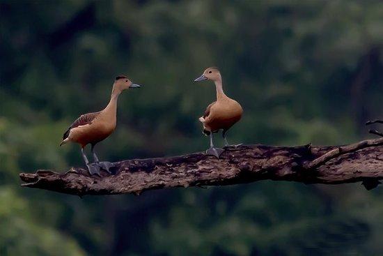 Randonnée ornithologique au lac...