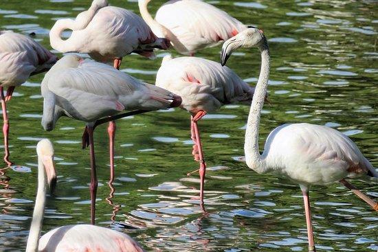 Donana nasjonalpark og El Rocío: 4x4 guidet tur fra Sevilla